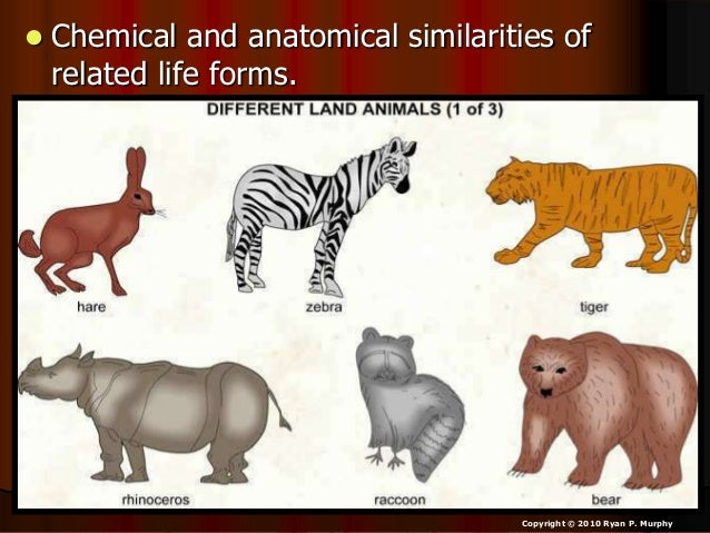 • Evolution Available Sheet that follows slideshow for classwork.