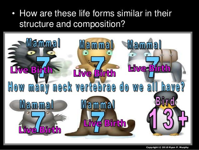 • How are these life forms similar in their structure and composition? Copyright © 2010 Ryan P. Murphy