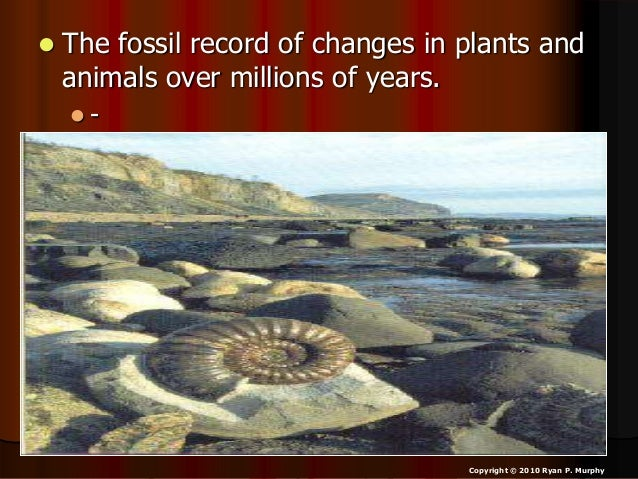  The fossil record of changes in plants and animals over millions of years.  From simple to more complicated. Copyright ...