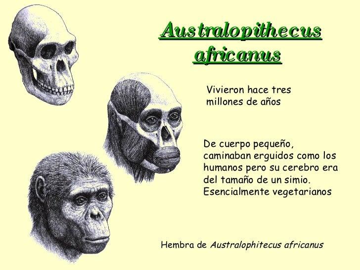 Australopithecus africanus   Hembra de  Australophitecus africanus Vivieron hace tres millones de años De cuerpo pequeño, ...