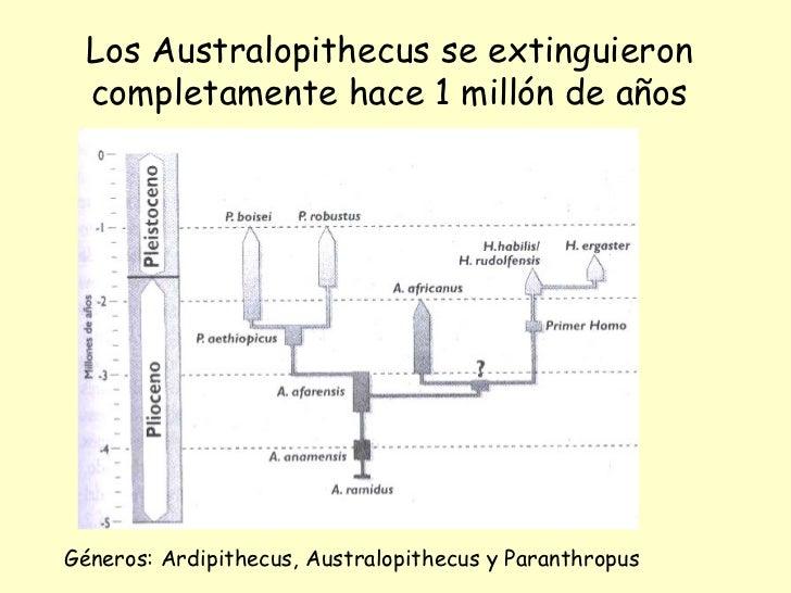 Los Australopithecus se extinguieron completamente hace 1 millón de años Géneros: Ardipithecus, Australopithecus y Paranth...