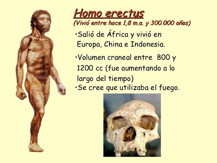 Homo erectus   (Vivió entre hace 1,8 m.a. y 300.000 años) <ul><li>Salió de África y vivió en  </li></ul><ul><li>Europa, Ch...