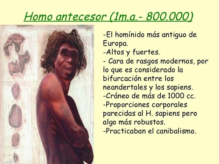 Homo antecesor (1m.a.- 800.000)   <ul><li>-El homínido más antiguo de Europa. </li></ul><ul><li>Altos y fuertes. </li></ul...