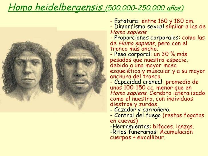 Homo heidelbergensis  (500.000-250.000 años) <ul><li>-  Estatura : entre 160 y 180 cm. </li></ul><ul><li>-  Dimorfismo sex...