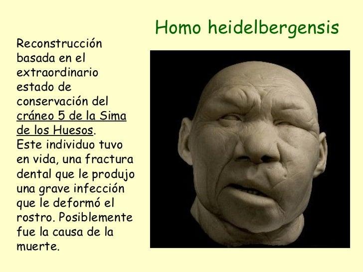 Homo heidelbergensis Reconstrucción basada en el extraordinario estado de conservación del  cráneo 5 de la Sima de los Hue...