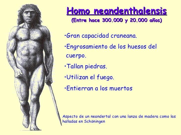 Homo neandenthalensis  (Entre hace 300.000 y 20.000 años) Aspecto de un neandertal con una lanza de madera como las hallad...