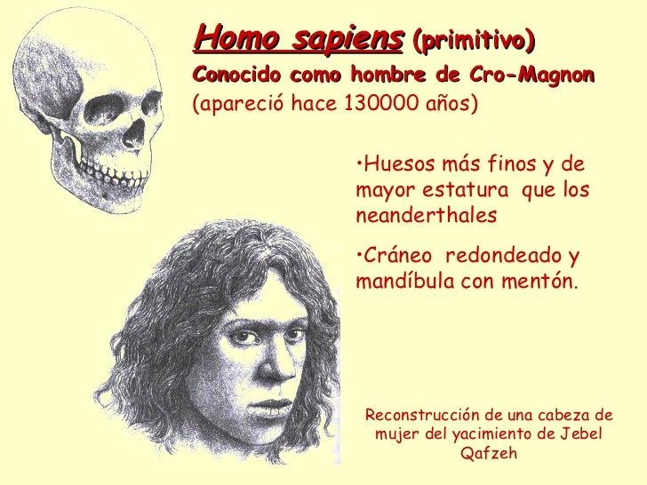 Homo sapiens  (primitivo) Conocido como hombre de Cro-Magnon (apareció hace 130000 años) Reconstrucción de una cabeza de m...