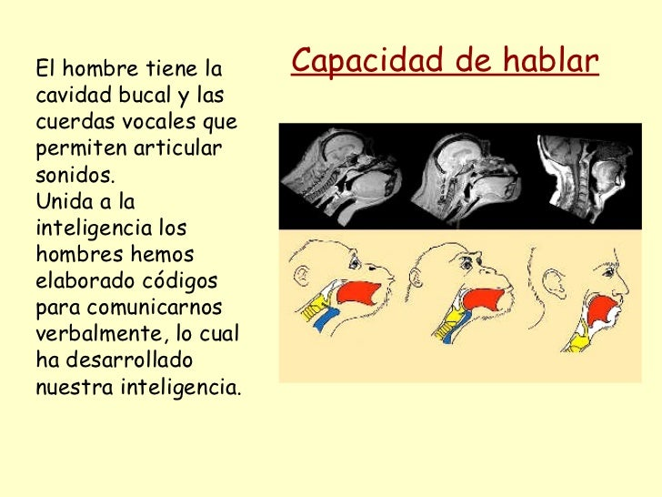 El hombre tiene la cavidad bucal y las cuerdas vocales que permiten articular sonidos. Unida a la inteligencia los hombres...