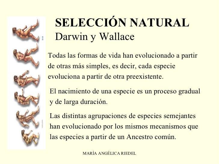 definicion de fauna yahoo dating