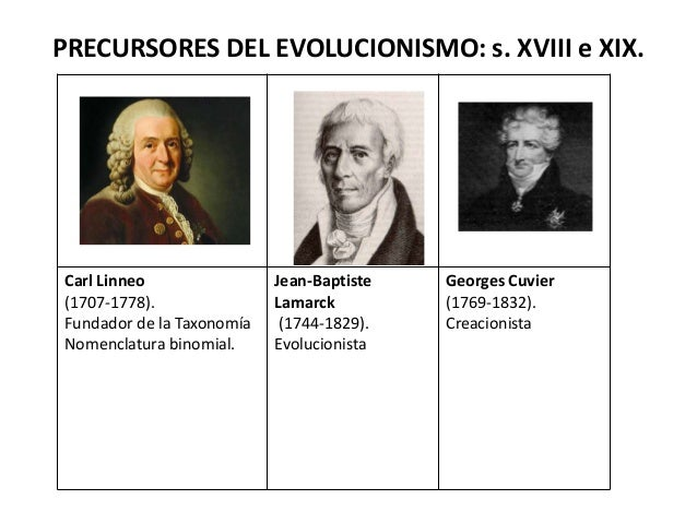 PRECURSORES DEL EVOLUCIONISMO: s. XVIII e XIX.Carl Linneo(1707-1778).Fundador de la TaxonomíaNomenclatura binomial.Jean-Ba...