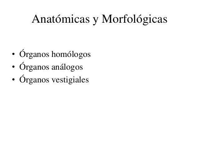 Anatómicas y Morfológicas• Órganos homólogos• Órganos análogos• Órganos vestigiales