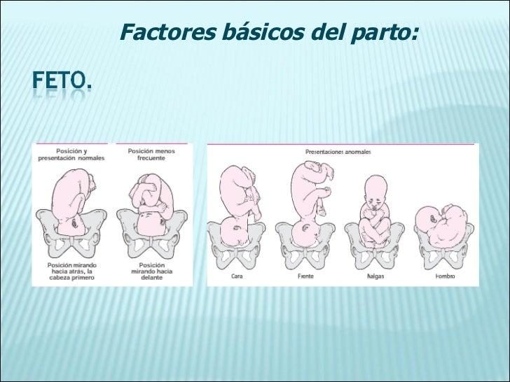 Factores básicos del parto: