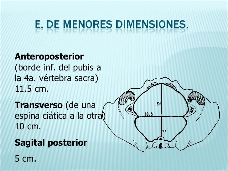Anteroposterior  (borde inf. del pubis a la 4a. vértebra sacra) 11.5 cm. Transverso  (de una espina ciática a la otra) 10 ...