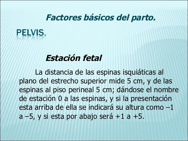 Estación fetal La distancia de las espinas isquiáticas al plano del estrecho superior mide 5 cm, y de las espinas al piso ...