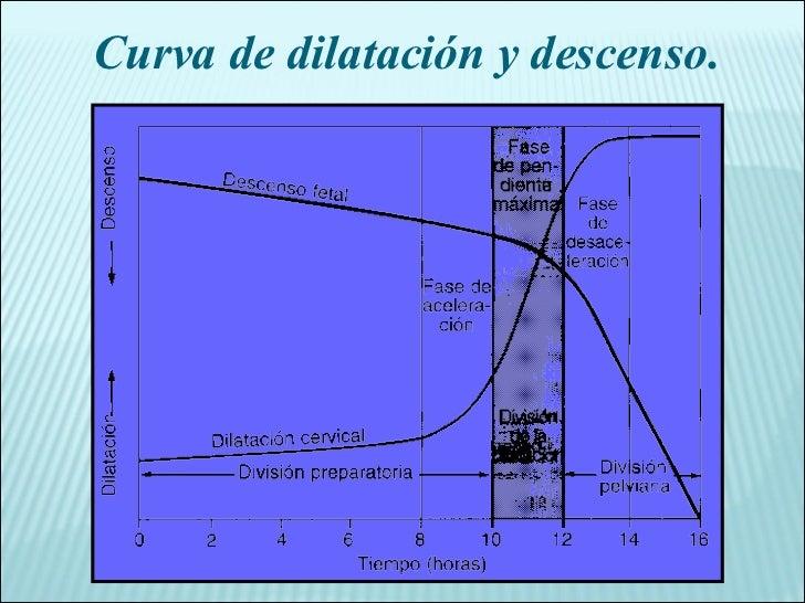 Curva de dilatación y descenso.