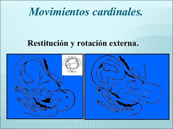 Movimientos cardinales. Restitución y rotación externa.