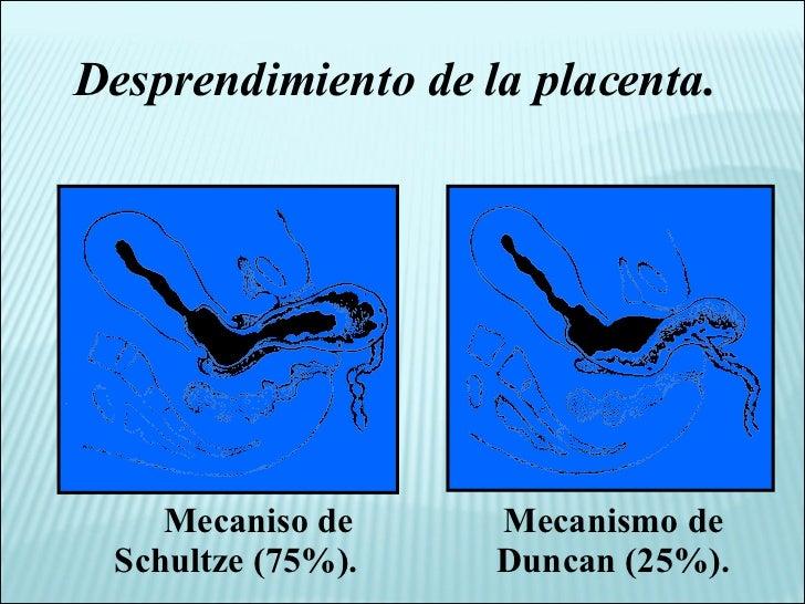 Desprendimiento de la placenta. Mecaniso de Schultze (75%). Mecanismo de Duncan (25%).