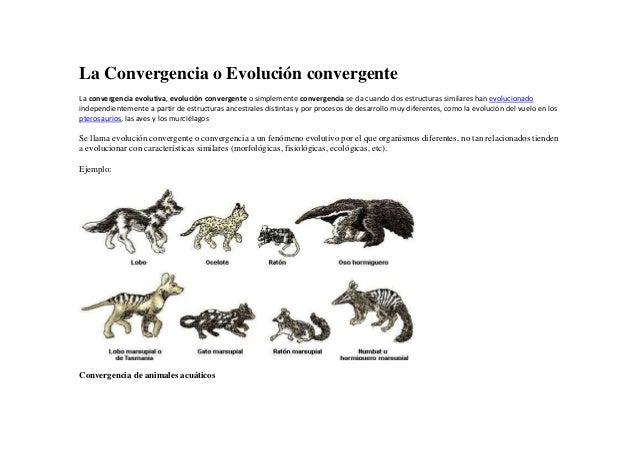 La Convergencia o Evolución convergente La convergencia evolutiva, evolución convergente o simplemente convergencia se da ...