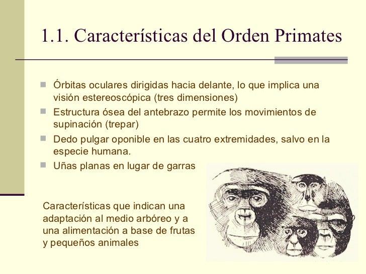 Evolución Humana Slide 3
