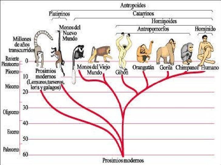 Evolucio Humans Slide 1