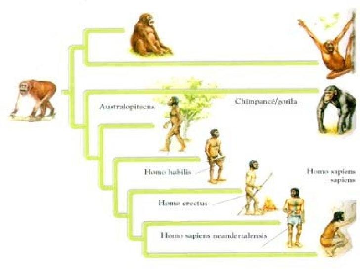 Evolucio Humans Slide 2
