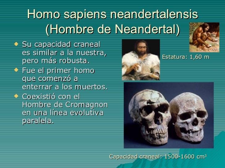 Homo sapiens neandertalensis (Hombre de Neandertal) <ul><li>Su capacidad craneal es similar a la nuestra, pero más robusta...