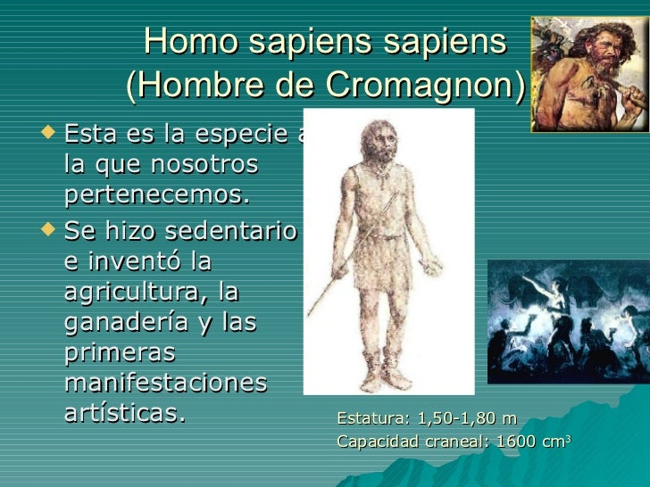 Homo sapiens sapiens (Hombre de Cromagnon) <ul><li>Esta es la especie a la que nosotros pertenecemos. </li></ul><ul><li>Se...