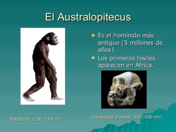 El Australopitecus <ul><li>Estatura: 1,30-1,50 m </li></ul><ul><li>Es el homínido más antiguo (5 millones de años) </li></...