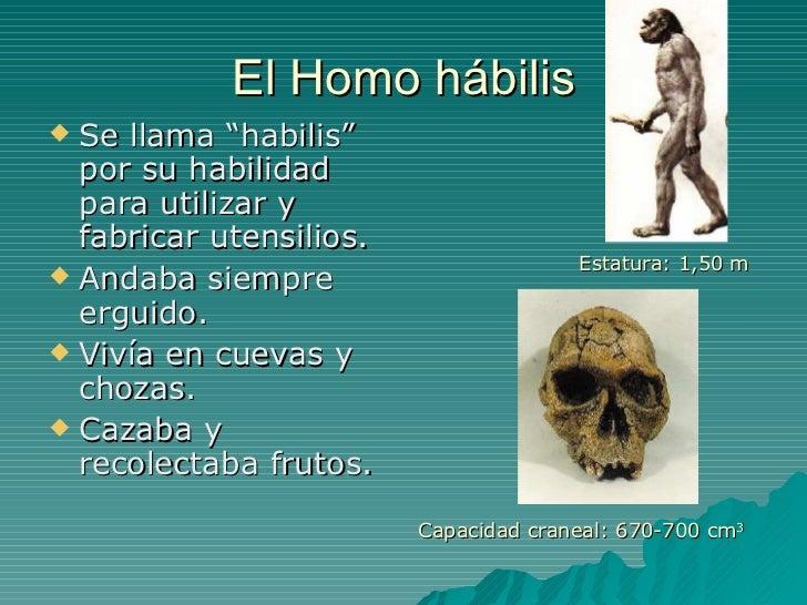 """El Homo hábilis <ul><li>Se llama """"habilis"""" por su habilidad para utilizar y fabricar utensilios. </li></ul><ul><li>Andaba ..."""