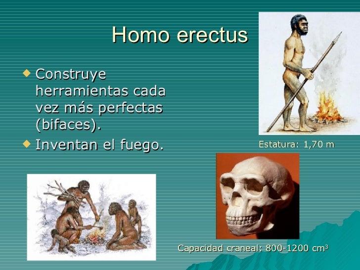 Homo erectus <ul><li>Construye herramientas cada vez más perfectas (bifaces). </li></ul><ul><li>Inventan el fuego. </li></...