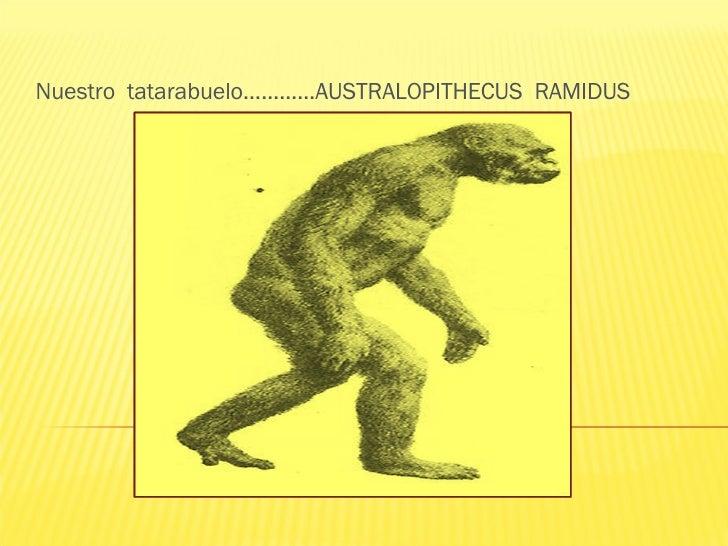 Nuestro  tatarabuelo…………AUSTRALOPITHECUS  RAMIDUS
