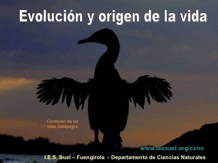 I.E.S. Suel – Fuengirola  - Departamento de Ciencias Naturales Evolución y origen de la vida Cormorán de las Islas Galápag...
