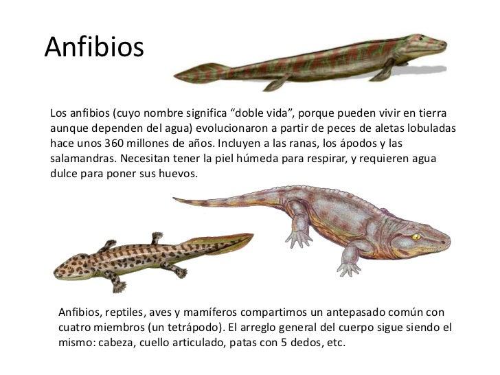 Resultado de imagen de Aves y anfibios de hace millones de años