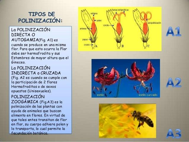 Evolucion de la polinizacion for Cuales son los tipos de plantas