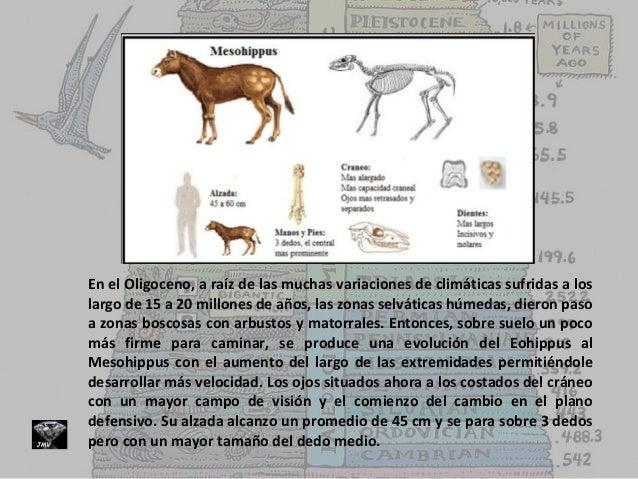 evolucin-del-caballo-teora-3-638 Pata Medina
