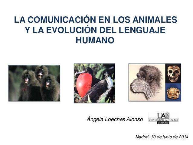 LA COMUNICACIÓN EN LOS ANIMALES Y LA EVOLUCIÓN DEL LENGUAJE HUMANO Ángela Loeches Alonso Madrid, 10 de junio de 2014