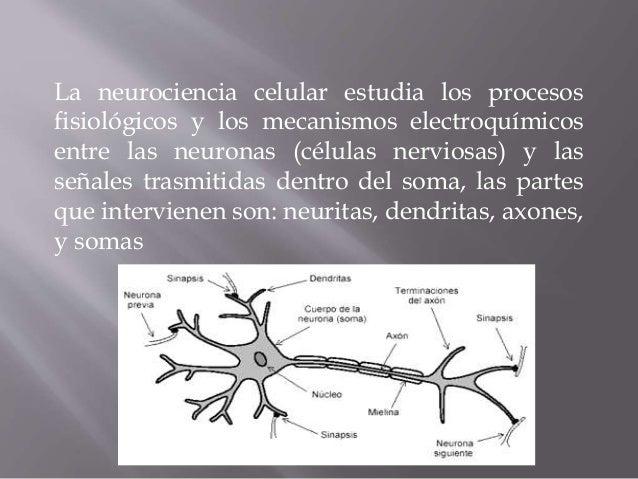 Resultado de imagen de Los procesos neuronales y la evolución