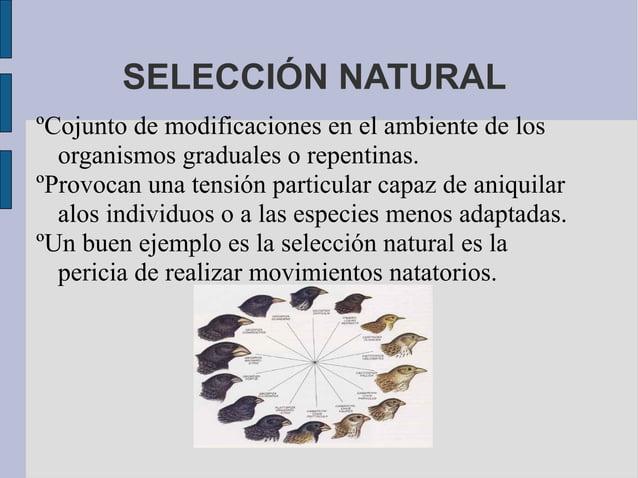 SELECCIÓN NATURALºCojunto de modificaciones en el ambiente de los  organismos graduales o repentinas.ºProvocan una tensión...