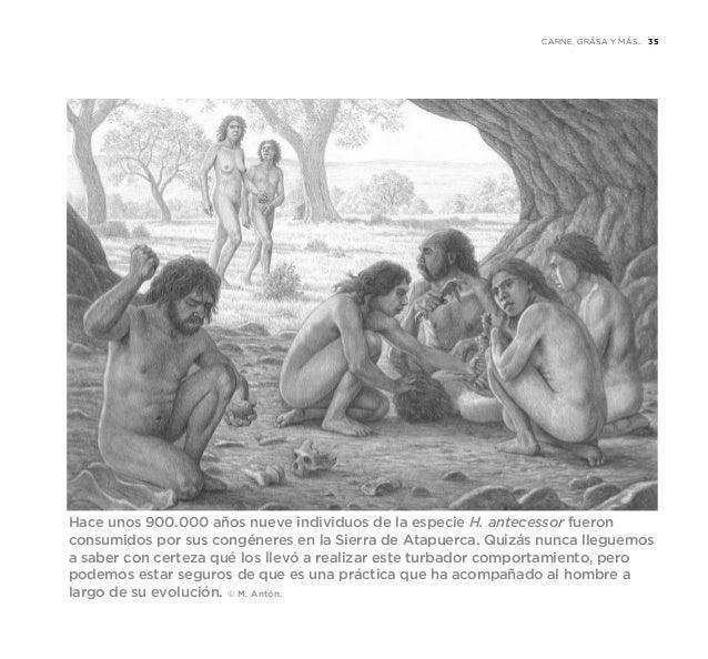 Resultado de imagen de La importancia de la Hembra en la Evolución humana