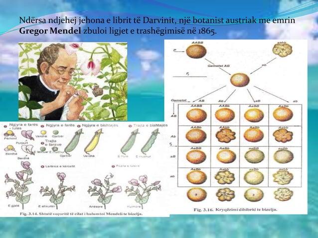 Ndërsa ndjehej jehona e librit të Darvinit, një botanist austriak me emrin Gregor Mendel zbuloi ligjet e trashëgimisë në 1...