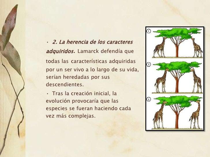 Teoria Evolucion Lamarck