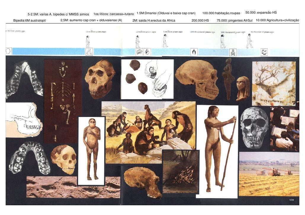 50.000: expansão HS         5-2.5M: varias A. bipedes c/ MMSS simios   1os líticos: carcassa+tutano 1.5M:Dmanisi (Olduvai ...