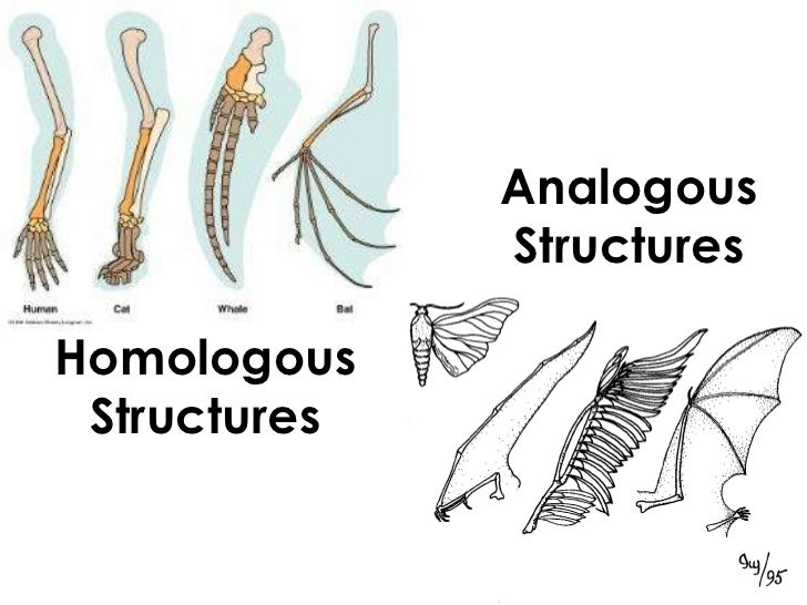 Examples Of Homologous And Analogous Organs Choice Image Example