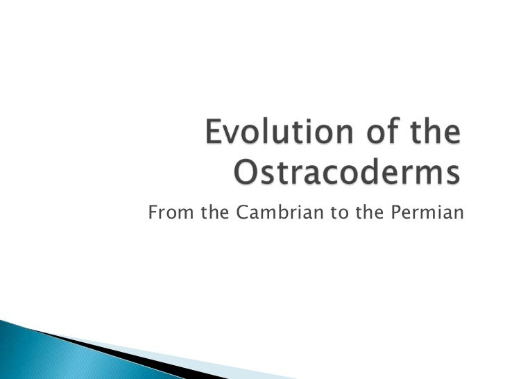 From the Cambrian to the Permian