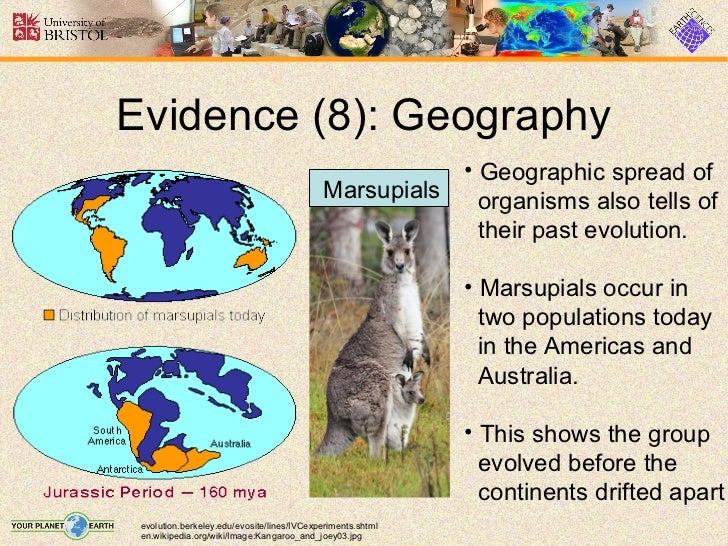 evolution of marsupials Marsupial and monotreme evolution and biogeography 3 table 1 some of the differences between the ancestral body plans of monotremes, marsupials, and.