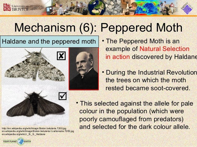 Explain Natural Selection Using Peppered Moth