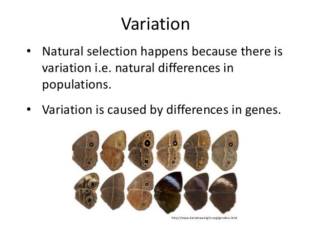 Why Are Variations Important For Natural Selection To Occur