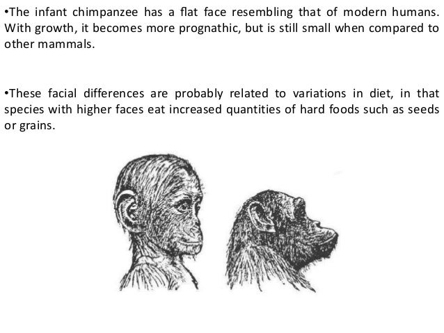 evolution of primate locomotion and body configuration There are many changes that occurred in locomotion and body configuration  through primate evolution, many of which are easily seen, but.