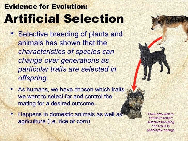 How Do Species Evolve Through Natural Selection