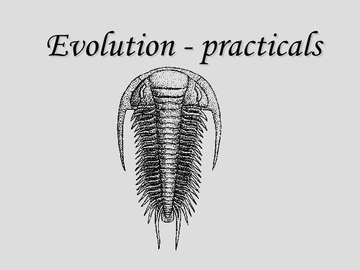 Evolution - practicals